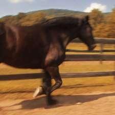 jack-hoofing-it