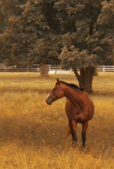 lone-horse-with-tree